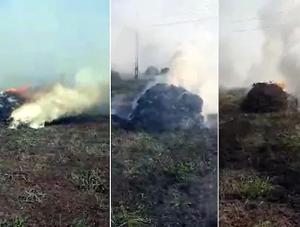 જૂનાગઢમાં વરસાદના કારણે મગફળી સડી જતા ખેડૂતે ૨૦ વીઘાના પાકને લગાવી આગ